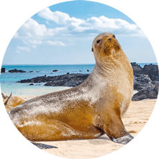 Best months to visit Galapagos
