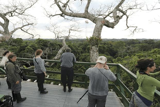 Birding Tower at Napo Wildlife Center