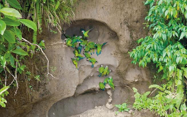 Amazon Rainforest Luxury Lodge