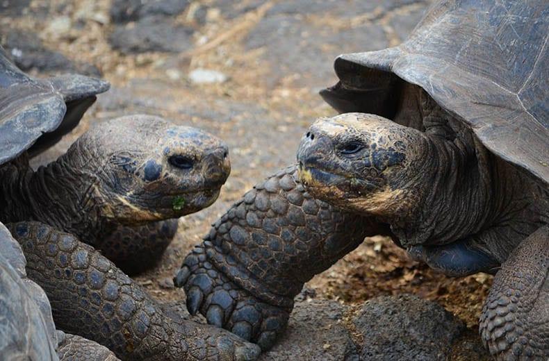 Galapagos Land based